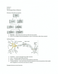 PSY 110 Lecture Notes - Lecture 3: Action Potential, Resting Potential, Myelin