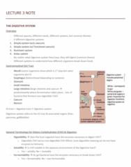 NUTR 3210 Lecture Notes - Lecture 3: Short-Chain Fatty Acid, Pancreatic Juice, Cecum