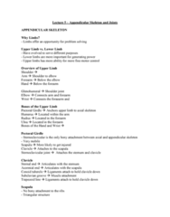 Health Sciences 2300A/B Lecture Notes - Lecture 5: Greater Sciatic Foramen, Joint, Pubic Arch