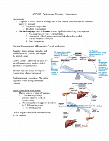 Anp1105 Lecture 7 Anp1105 Anatomy And Physiology Homeostasis