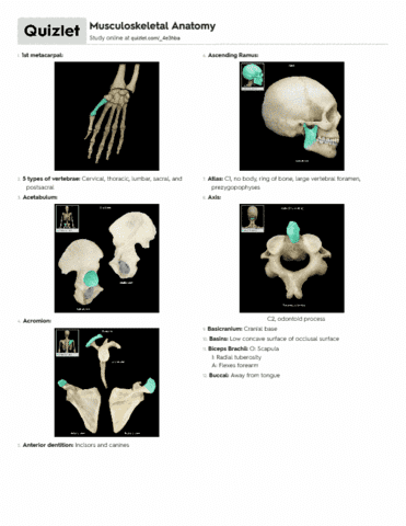 Anp 410 quiz musculoskeletal anatomy lab guide oneclass ccuart Image collections