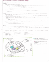 PSY374H5 Lecture Notes - Lecture 9: Uch, Supplementary Motor Area, Visual Cortex