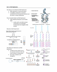 BIOL239 Lecture Notes - Lecture 11: Dna Supercoil, Dna Polymerase Iii Holoenzyme, Replisome
