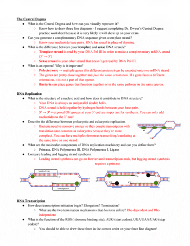Bsci 223 Study Guide 2018 Midterm Dna Polymerase Iii Holoenzyme
