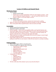 PHIS 206 Lecture Notes - Lecture 10: Golgi Tendon Organ, Withdrawal Reflex, Muscle Spindle
