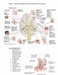 NPP1101 Lecture Notes - Lecture 7: Snellen Chart, Lacrimal Apparatus, Rinne Test