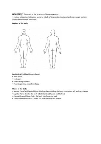 Nett Anatomie Des Menschen Study Guides Bilder - Anatomie Von ...