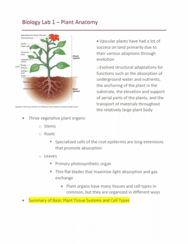 Bisc 1414 Textbook Notes Spring 2018 Chapter 35 Plant Stem Gas