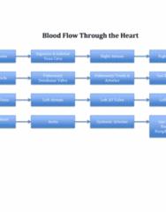 BIOL 205 Study Guide - Final Guide: Circulatory System