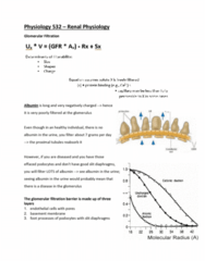 PSIO 532 Study Guide - Final Guide: Renal Function, Podocyte, Endothelium