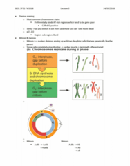 BIOL 3P51 Lecture Notes - Lecture 3: Dna Replication, Slinky, Giemsa Stain