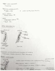 MOVESCI 230 Midterm: Exam 1: Module 6 - Elbow, wrist and hand