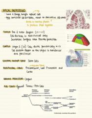 BIOL 2043 Lecture Notes - Lecture 10: Vascular Cambium, Haplogroup R1B, Meristem