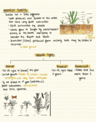 BIOL 2043 Lecture Notes - Lecture 11: Stolon, Photosynthesis, Storage Organ