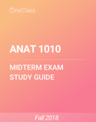 ANAT 1010 Study Guide - Winter 2018, Comprehensive Midterm Notes - Thalamus, Spinal Cord, Skeletal Muscle