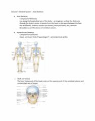 ANAT 1010 Lecture Notes - Lecture 7: External Occipital Protuberance, Sphenoidal Sinus, Mandibular Fossa