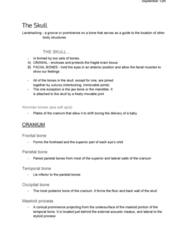 ANA300Y1 Lecture Notes - Lecture 2: Ear Canal, Wormian Bones, Foramen Magnum