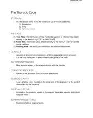 ANA300Y1 Lecture Notes - Lecture 4: Spine Of Scapula, Acromion, Xiphoid Process