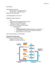 01:119:115 Lecture Notes - Lecture 16: Methylation, Cyclic Adenosine Monophosphate, Intron