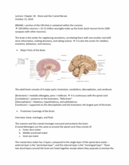 ANAT 1010 Lecture Notes - Lecture 14: Dura Mater, Arachnoid Mater, Pia Mater