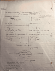 MATH 1004 Lecture Notes - Lecture 1: Bes
