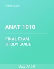 ANAT 1010 Study Guide - Comprehensive Final Exam Guide - Muscle, Spinal Cord, Epithelium