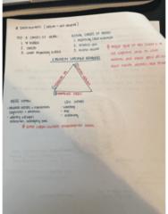 EXSC 191 Midterm: Exam 1 Study Guide pg.3