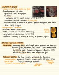 BIOL 2053 Lecture 35: Fungi, pt.2
