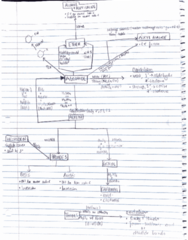 CHEM 238 Midterm: Flow chart for reactions